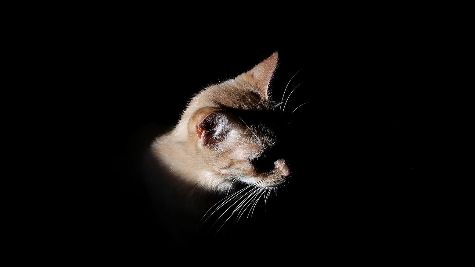"""the great cat massacre In a famous study of the great cat massacre, historian robert darnton tries to figure out why a group of apprentice printers living and working on rue saint-séverin in paris """"massacred"""" cats in the late 1730s."""